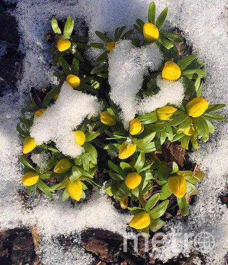 ВПетербурге распустились первые цветы