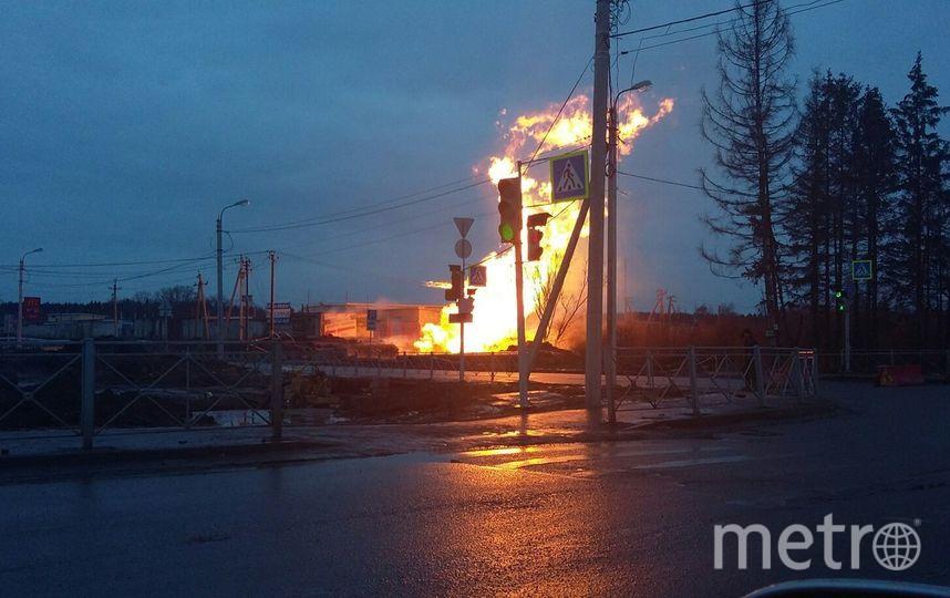 Пожар на газопроводе в Гатчине произошел утром 2 марта. Фото ДТП/ЧП - все, vk.com