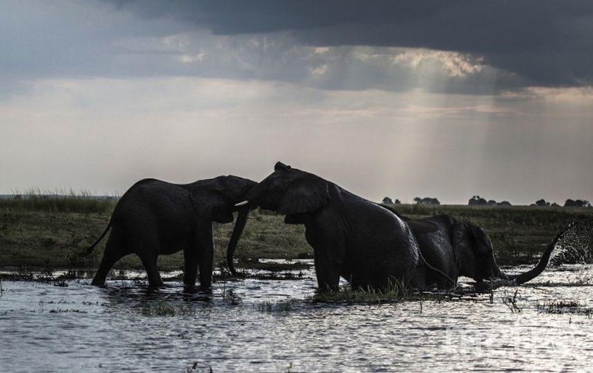 Исследуемые слоны. Фото AFP