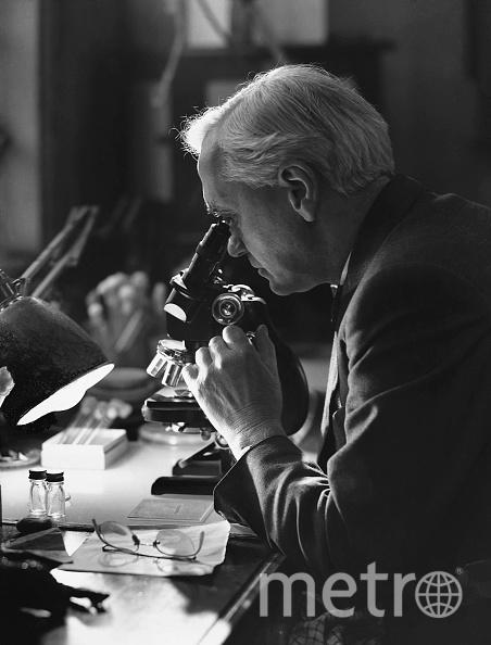 Александр Флеминг в лаборатории. Фото Getty