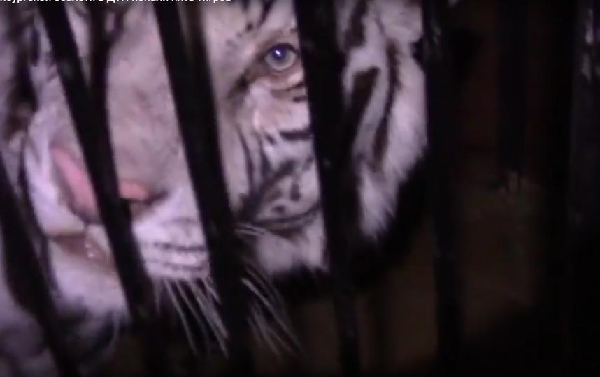Скриншот видео 56.мвд.рф. Фото Скриншот Youtube