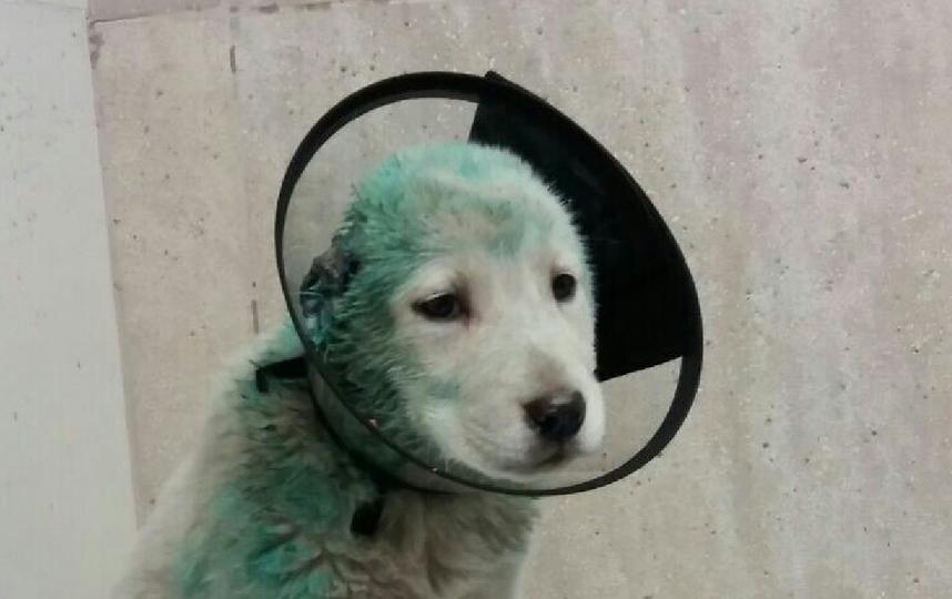 В Петербурге нашли живодерню со щенками и свиньями. Фото vk.com