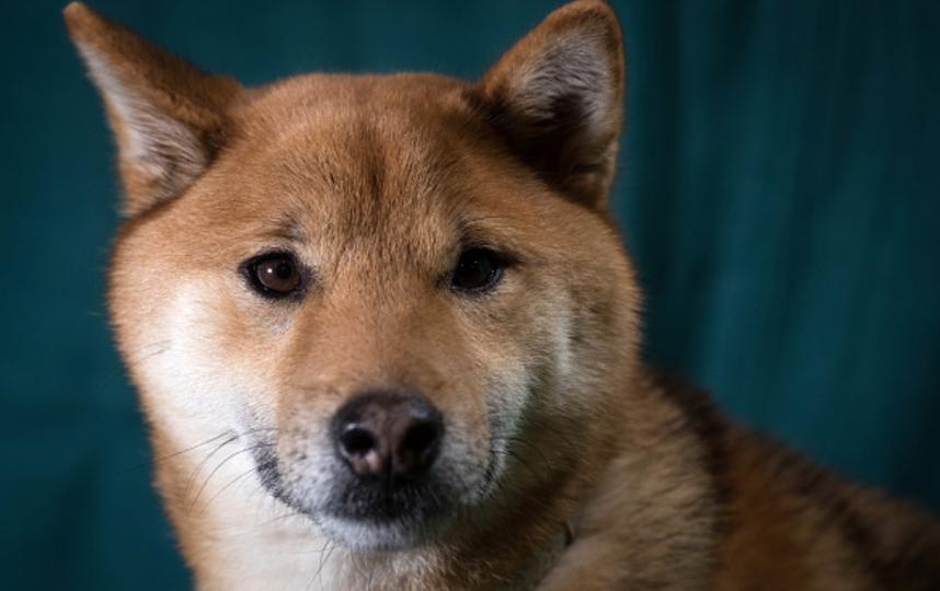 Любимый пес руководителя Дагестана Абдулатипова весело встретил владельца ссамолета