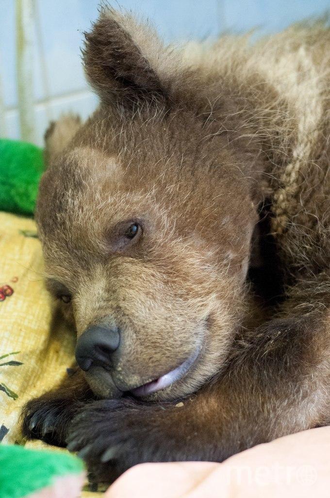 Медвежонок Сеня.