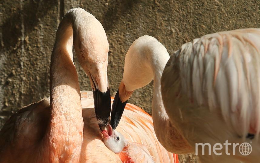 Дети досмерти запинали розового фламинго взоопарке