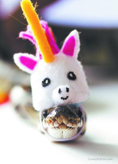 Питон по имени Снейки примеряет на себя разные головные уборы. Фото facebook.com/snakeypython