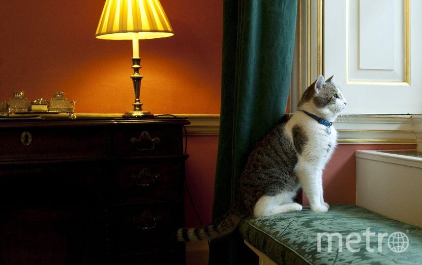Кот Ларри. Фото Getty
