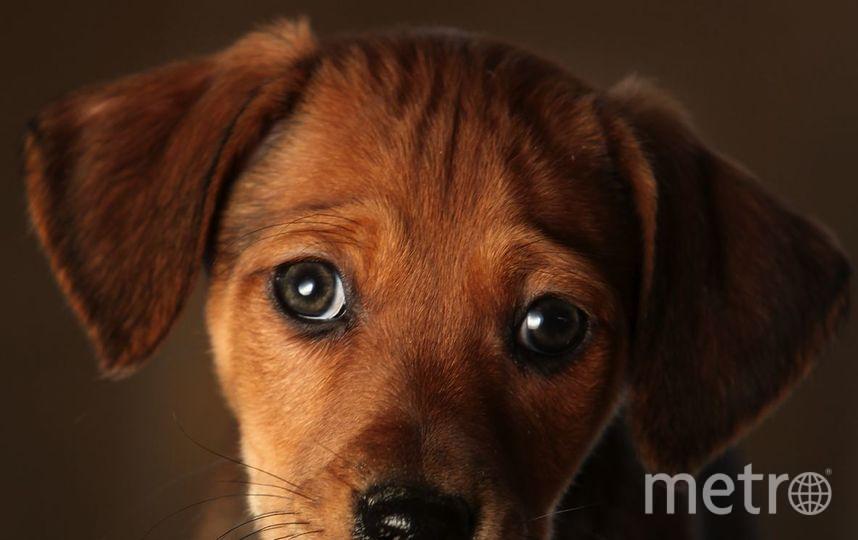 ЗакС Петербурга намерен запретить кошкам и собакам жить в парадных. Фото Getty