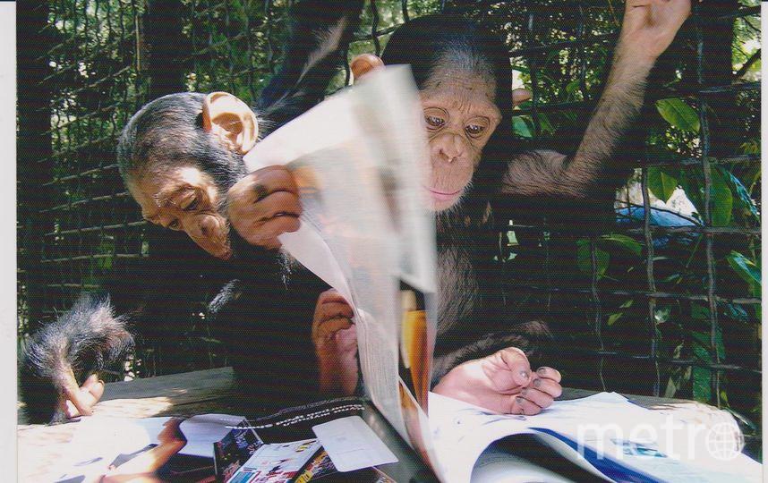 Обезьяны из ялтинского зоопарка туберкулёзом не болели. Фото предоставлено олегом Зубковым