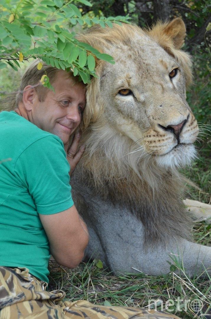 Олег Зубков основал парк львов 23 года назад. Это самый большой парк крупных кошек в Европе. Фото предоставлено Олегом Зубковым