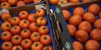 Эксперты подсчитали, на сколько были бы дешевле продукты без эмбарго