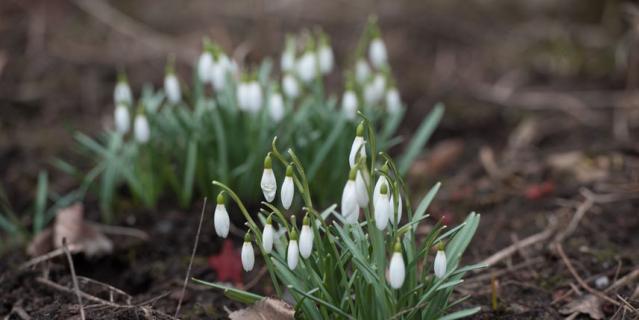 В Петербург приходит весна: фото подснежников и вербы