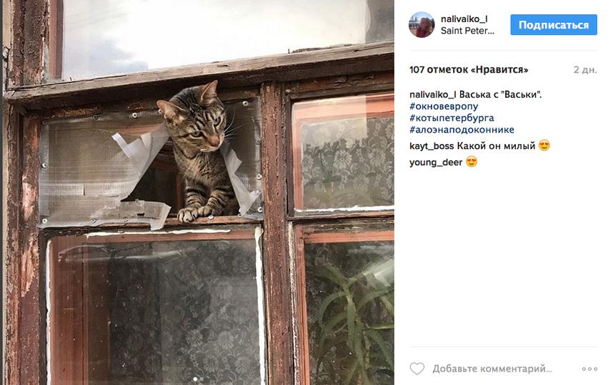 И даже котики вышли погреться. Фото Instagram