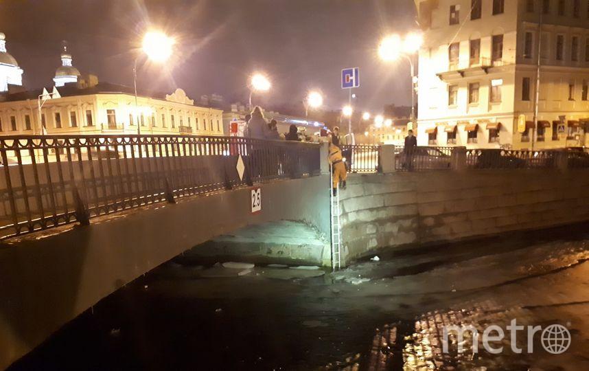 В Петербурге спасатели вытащили кота из-под моста. Фото «ДТП и ЧП | Санкт-Петербург», vk.com