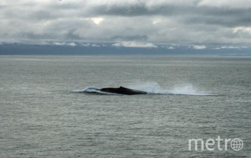 Синий кит. Фото РИА Новости
