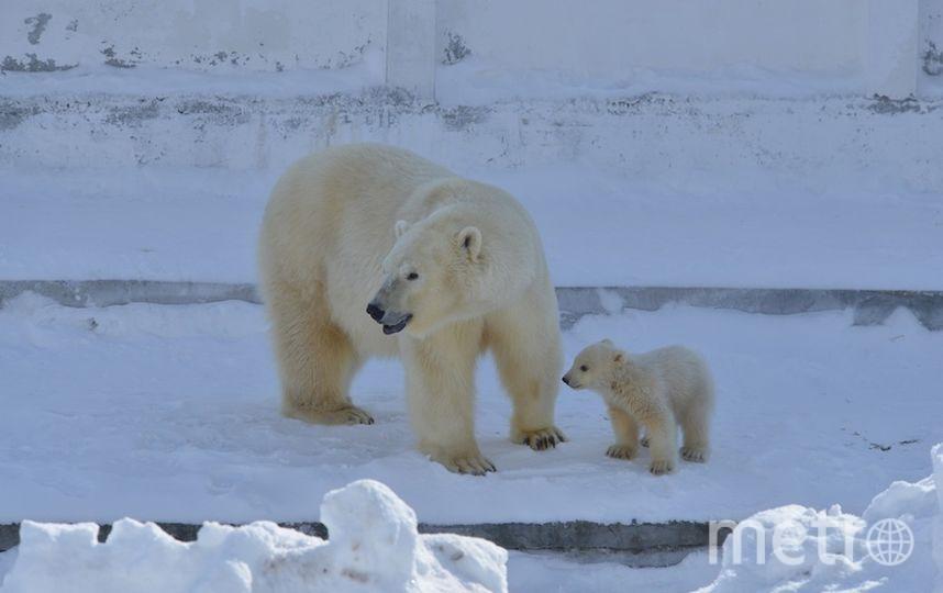 Медвежонок с мамой. Фото Федор Яковлев/WWF России