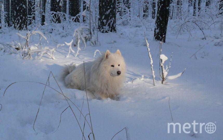 Пострадавшая собака. Фото предоставила Ася Аникина