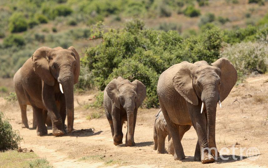 ЮАР. Фото Getty