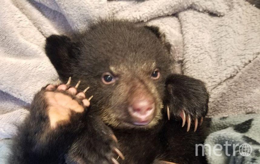 Житель америки спас медвежонка от смерти