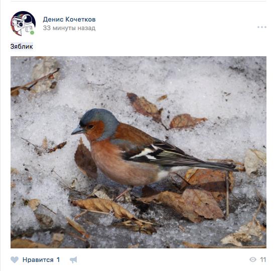 """Москвичи делятся фотографиями пернатых. Фото скриншот """"Вконтакте"""""""
