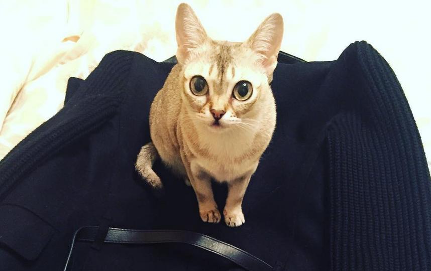 Фото: instagram.com. Кошка Анжелики Варум.