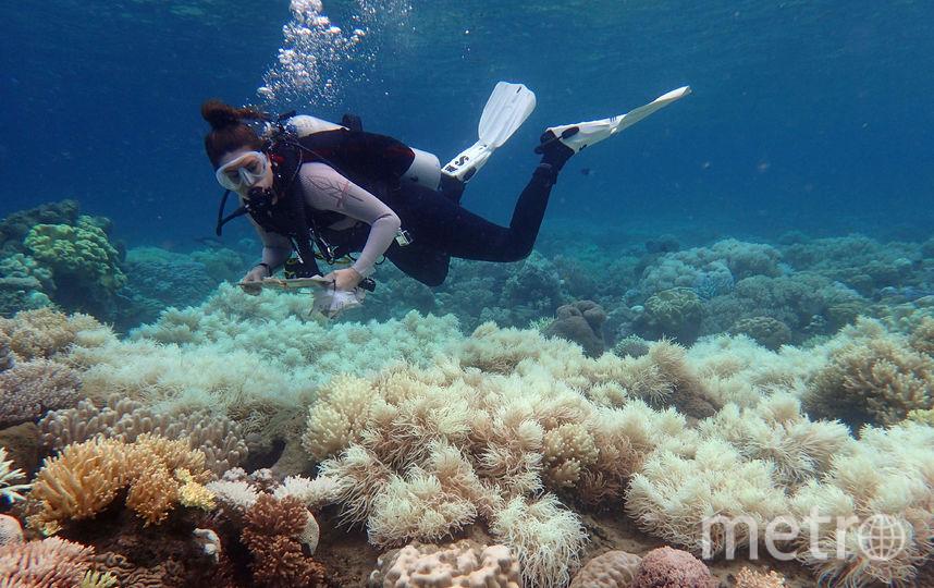 Большой Барьерный риф вАвстралии обесцвечен уже надве трети