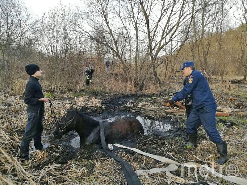 Спасение лошади. Фото mosoblspas.ru