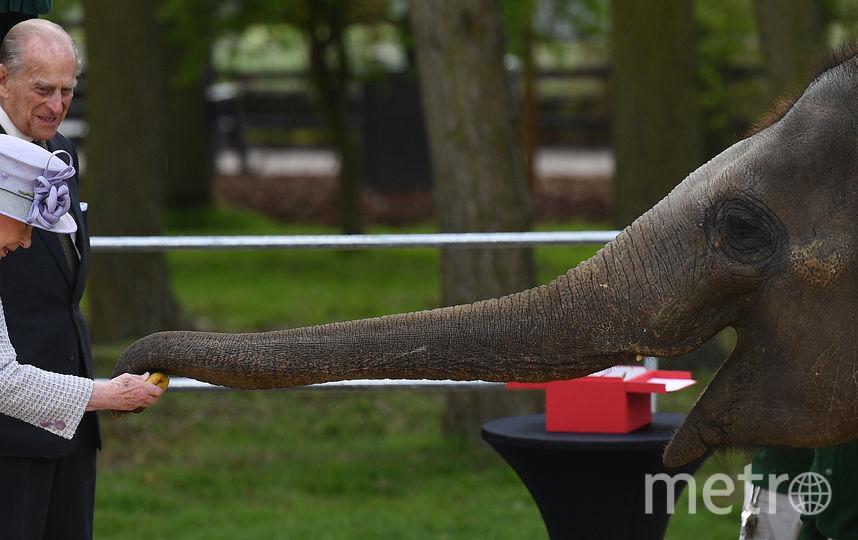 Королева Елизавета II и её супруг принц Филипп в зоопарке в Лондоне. Фото AFP