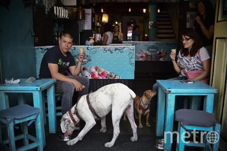 ВИталии реализуют  мороженое для четвероногих— Собачье лакомство