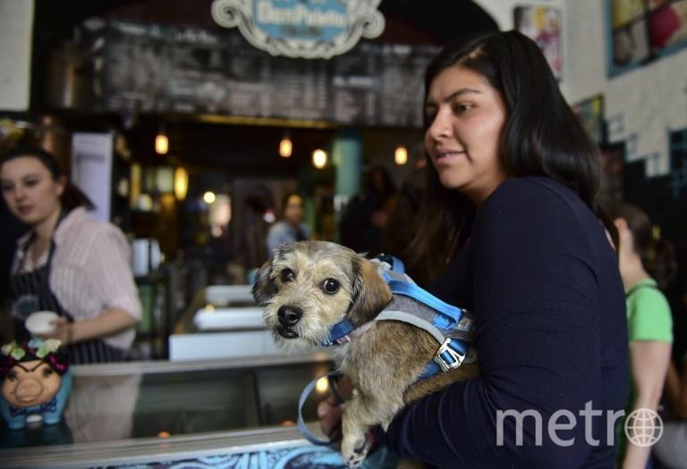 Четвероногие клиенты кафе, где продают мороженое для собак. Фото AFP