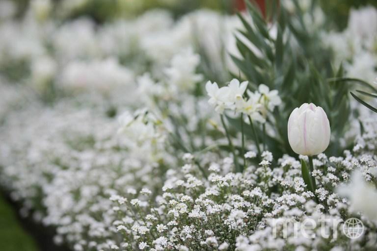 Белый сад в Лондоне. Фото AFP
