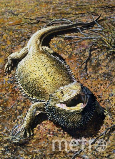 Бородатый Дракон. Фото Getty