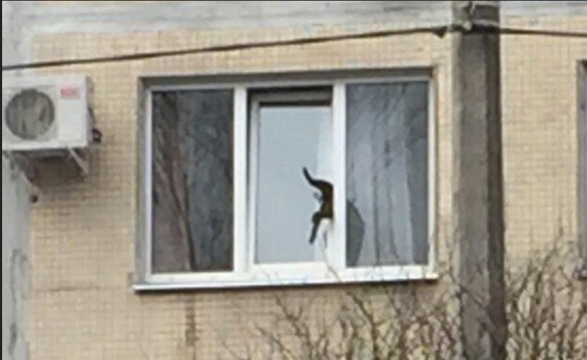 Картинки по запросу В Петербурге застрявшего на третьем этаже кота вызволяли две пожарные машины