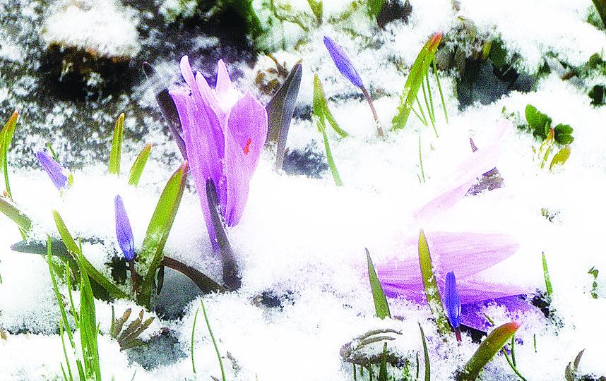 """Снегопады в Петербурге в апреле 2017 года продолжают удивлять. Фото Алевтина Здоровенина., """"Metro"""""""