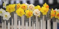 Выставка весенних цветов открылась в Британии