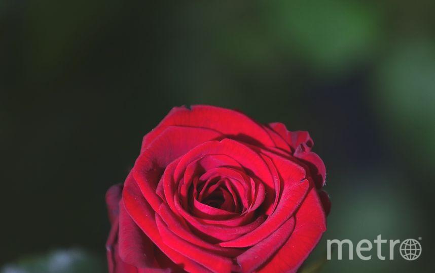Выставка весенних цветов открывается в эти дни в Йоркшире, Англия. Фото Getty