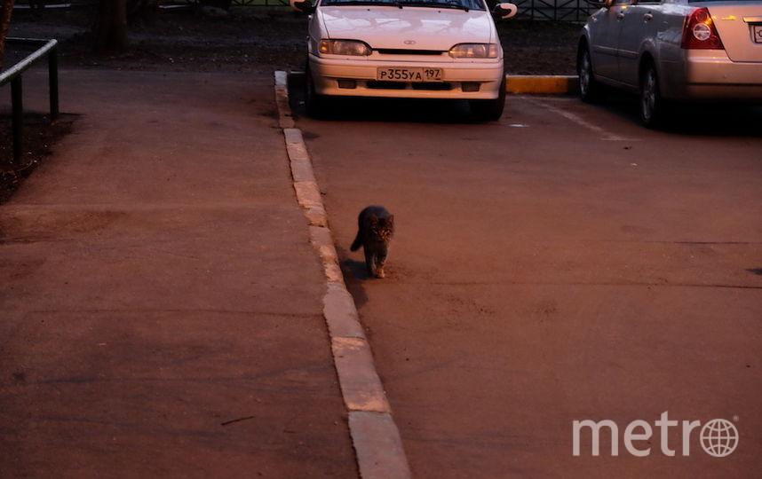 "К подъезду продолжают приходить кошки. Фото Алёна Гудеменко., ""Metro"""