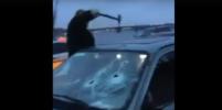 Дорожные войны: в Петербурге водитель задел иномарку, разбил ее молотком - и попал на видео