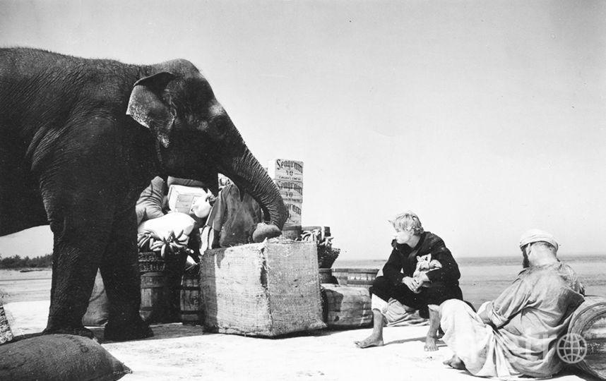 Кадр из фильма. Сцену со слоном снимали в Петербурге  | фото предоставлено «Ленфильмом».