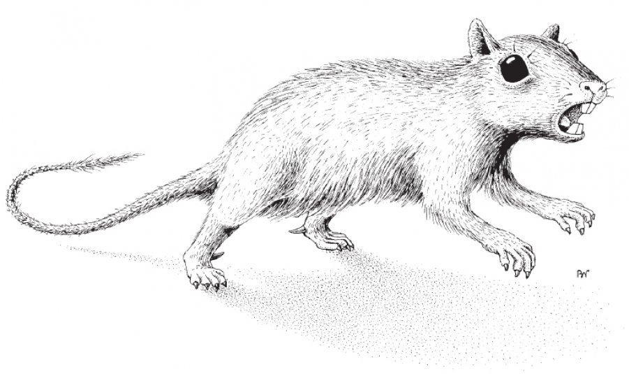 Ученые отыскали вСибири новый вид старинных млекопитающих