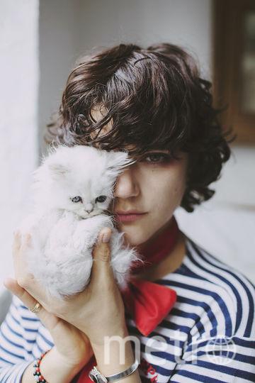 Любить кошек – модно. Фото PUSS PUSS