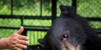 В Приморье спасли гималайского медвежонка