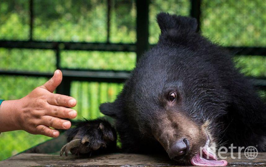 Гималайский медведь. Фото Getty