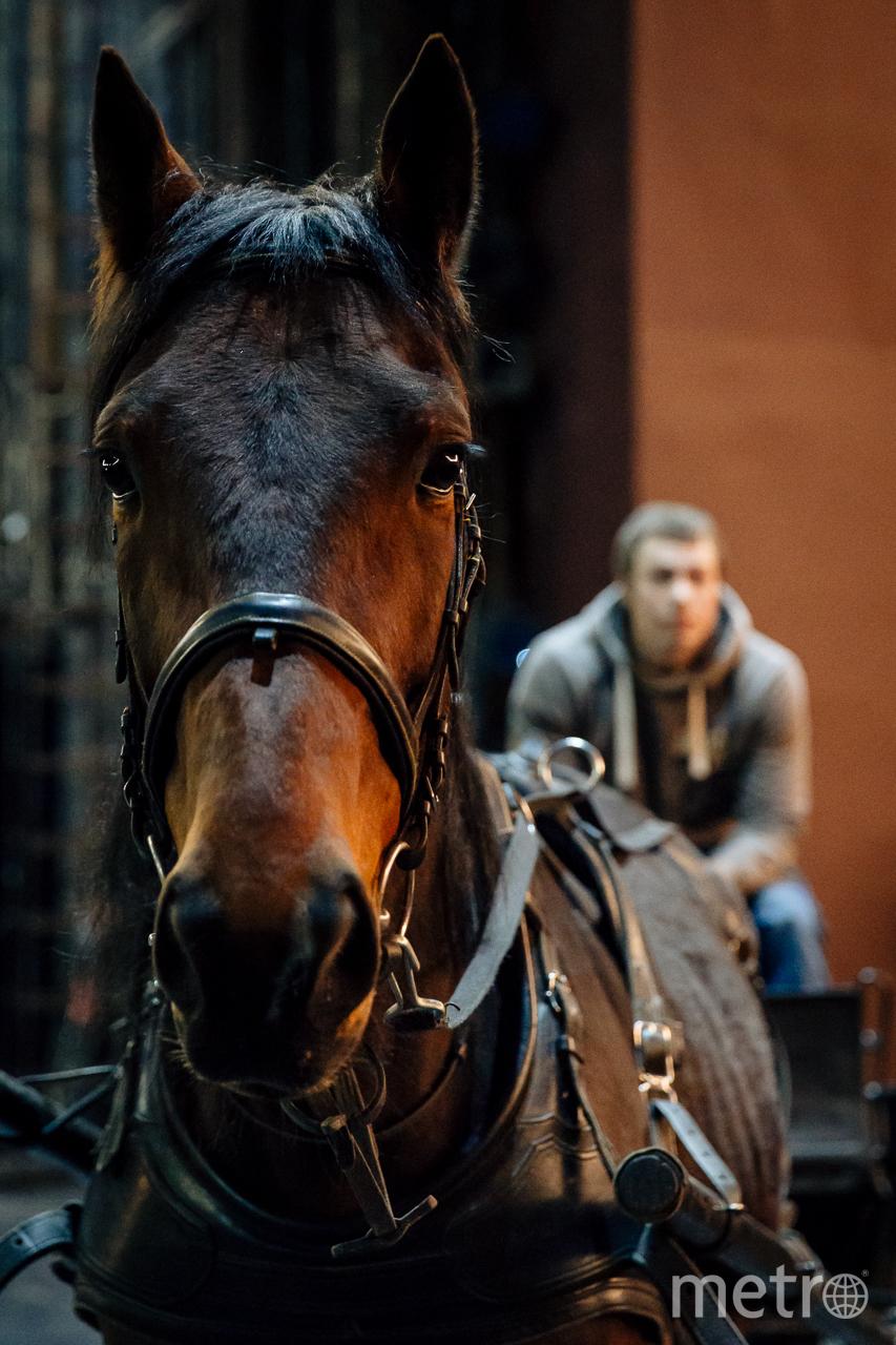 Конь вышел на театральную сцену в Петербурге. Фото Фото Натальи Кореновской предоставлены театром Балтийский дом.