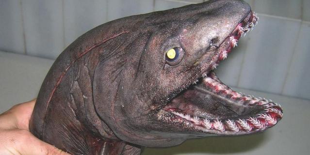 Самые страшные обитатели морских глубин сделали Instagram мурманчанина хитом